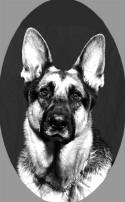 OSI404GermanShepherd72_small1