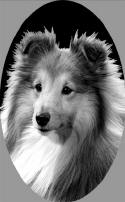 SI430Sheltie_small1