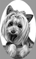 SI410Yorkie_small1
